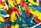 Жевательный мармелад Акула разноцветная (2,5 кг)